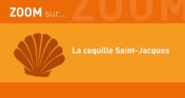 Zoom sur un produit de saison : la coquille Saint-Jacques